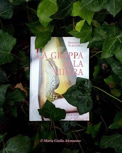 la-grappa-alla-vipera-e-ledera